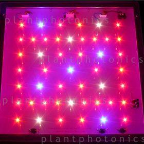 Plant Photonics