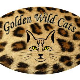 Golden Wild Cats