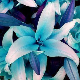 Lilien Bliss