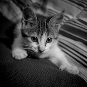 LINDUŠ CAT