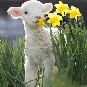 nihan çobanoğlu
