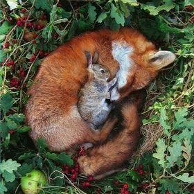Wild Fox 🐱