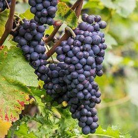 Wine Names