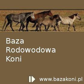 Baza Koni
