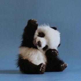Selin Mr.Panda