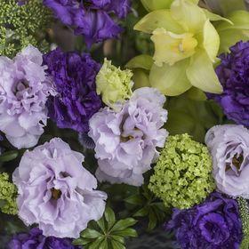 fiori GIOIA