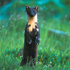 Speyside Wildlife