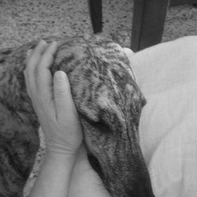 Greyhoundhelp Association