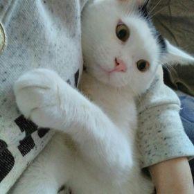 Pufarina Miau Miau