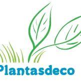 Plantasdeco