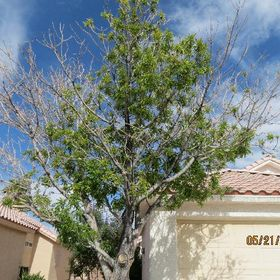 Crown To Stump Tree removal