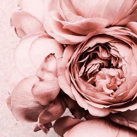 zimmer voller rosen und sexy bett