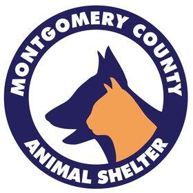 MCAS Pets