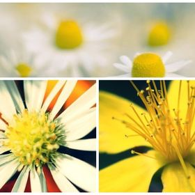 M Flower