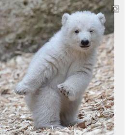 Yee Dancin Bear