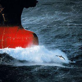 Брат Океан // Круизник.RU