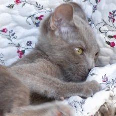 catimages cat