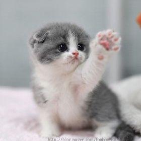 Cutie Kitty 123