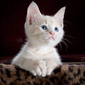 KittyBest