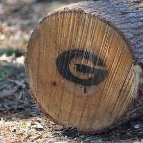 UGA Warnell School of Forestry & Natural Resources