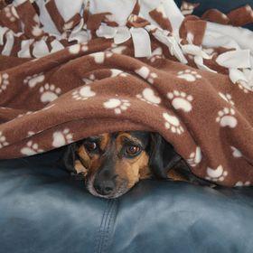 "~Primitive Raggedy Puppy Dog /""WRIGLEY/""~*PATTERN*~#2"