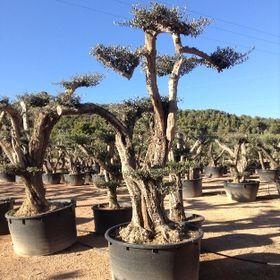 Big Plant Nursery