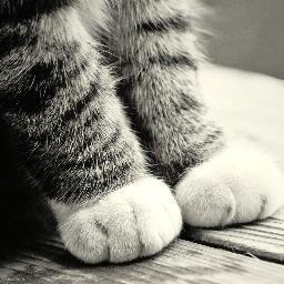 11件 動物 おすすめの画像 動物 子猫 キュートな猫