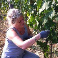 Hegyem Hungarian Wine