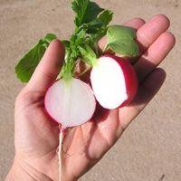 Organic Garden AZ