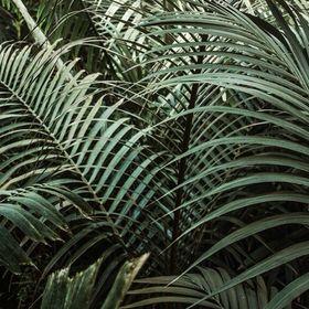 holy palm