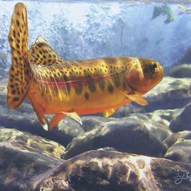 fish-dezdemon