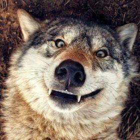 Crazy Wolf XD