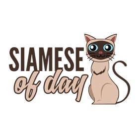 Siamese Of Day | Cat Tips | Blog and More
