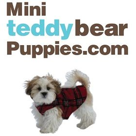 MiniTeddyBearPuppies.com