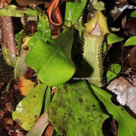 Borneo Scape