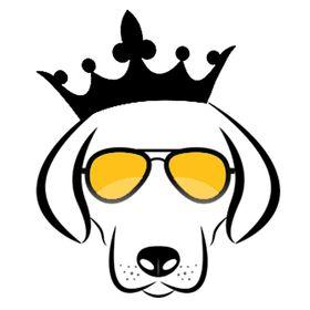 Doggykingdom®   Dog Shop   Highest Quality Dog Accessories