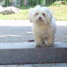 Schoko Hund