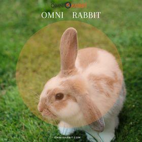 Omni Rabbit