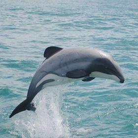 Jumping Bottlenose Dolphins Girls Kids T-Shirt Tee Age 3-13