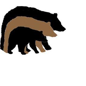 3 Working Bears
