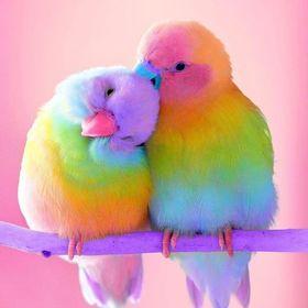 Rainbow Cuteness