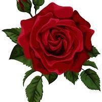 CC Rose
