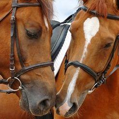 Paardenzorg.com Ruitersport