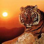 Tigris Mompracem