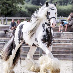 AM ❤️ Horses