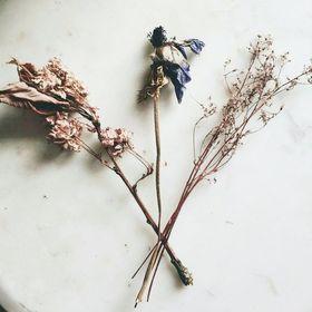 Warrior Botanicals