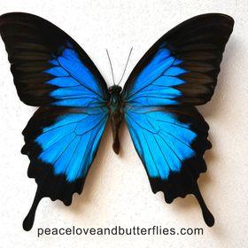 Peace Love Butterflies Art Photography Todddehaven Profile Pinterest