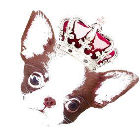 Chihuahuas Villa del Rey