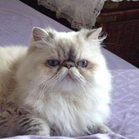 An Cat Dubh
