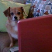 Esme Beagle
